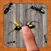 Ant Smasher Game - Best, Cool & Fun Games!