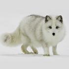 Animals Sound - Animal Sound Effects