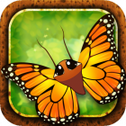 Flutter: Butterfly Sanctuary