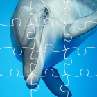 Jigsaw Puzzles Games Page Dolphins Education